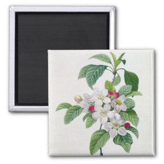 Blossom, from 'Les Choix des Plus Belles Refrigerator Magnet