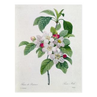 Blossom, from 'Les Choix des Plus Belles Postcard
