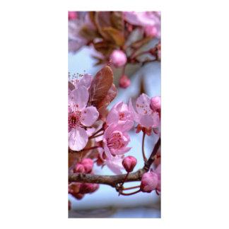 Blossom of Cherry Rack Card