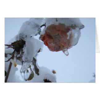 Blossom of Snow Card