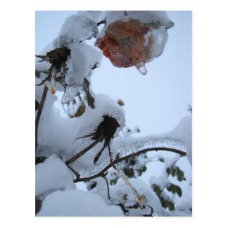 Blossom of Snow Postcard