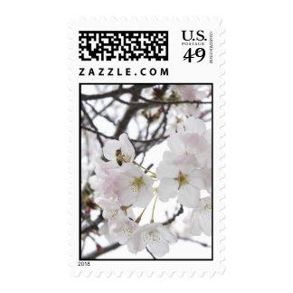 Blossom Postage Stamp
