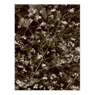 Blossom Postcard
