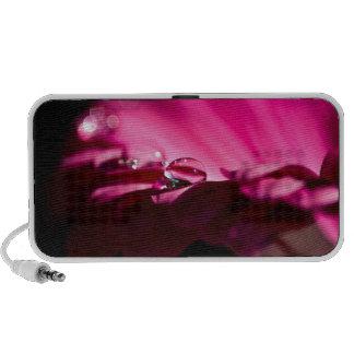 blossom iPhone speakers