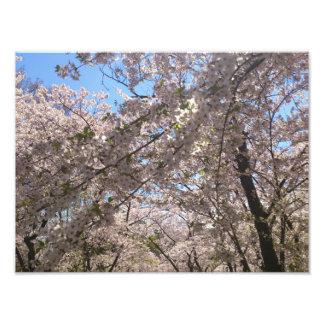 Blossom Time Photographic Print