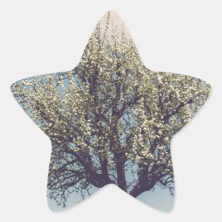 Blossom tree on A hill in Switzerland Star Sticker