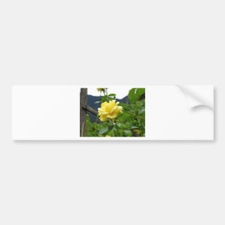 Blossom yellow rose on a mountain background bumper sticker