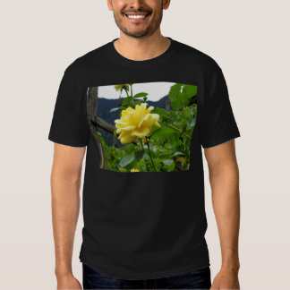 Blossom yellow rose on a mountain background tee shirt