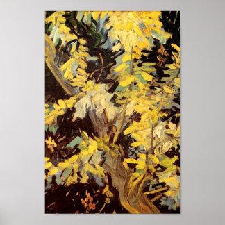 Blossoming Acacia Branches Van Gogh Fine Art Poster
