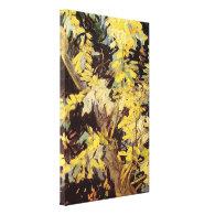 Blossoming Acacia Branches Vincent van Gogh. Canvas Print