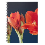 Blossoming Amaryllis Flower Note Book
