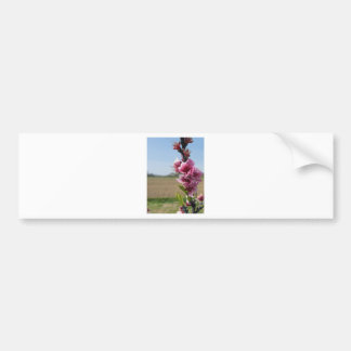 Blossoming branch of a peach tree in spring bumper sticker