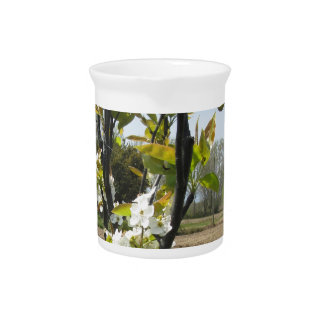 Blossoming branches of a pear tree in spring beverage pitcher