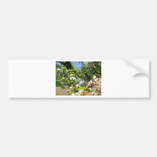 Blossoming branches of a pear tree in spring bumper sticker
