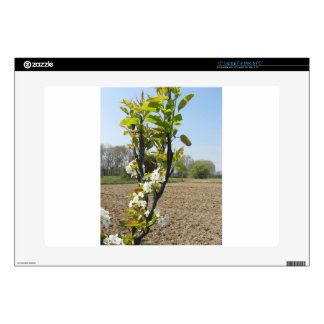 """Blossoming branches of a pear tree in spring decals for 15"""" laptops"""