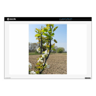 """Blossoming branches of a pear tree in spring decals for 17"""" laptops"""