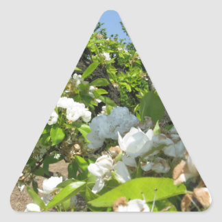 Blossoming branches of a pear tree in spring triangle sticker