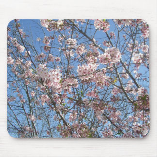 Blossoming Cherry Trees Mouse Pad