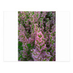 Blossoming Moorland Post Cards