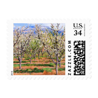 Blossoming peach orchard in Palisade CO postage