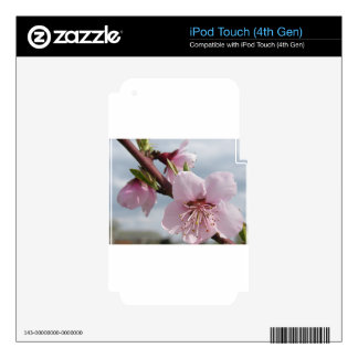 Blossoming peach tree against the cloudy sky iPod touch 4G skins