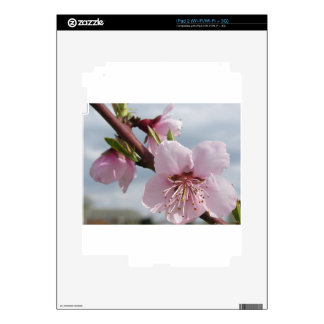 Blossoming peach tree against the cloudy sky skins for iPad 2