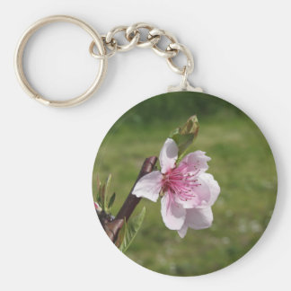 Blossoming peach tree against the green garden keychain