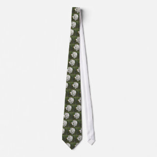 Blossoming pear tree against the green garden tie