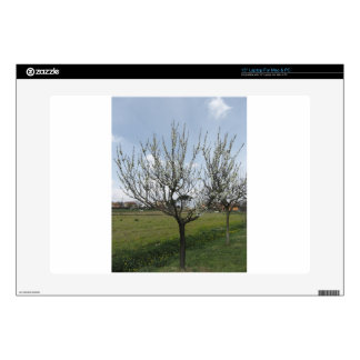 """Blossoming pear tree in the garden  Tuscany, Italy Decals For 15"""" Laptops"""