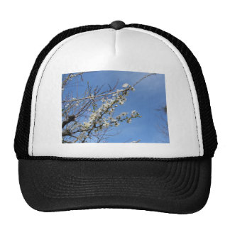 Blossoming plum against the sky . Tuscany, Italy Trucker Hat