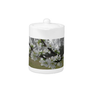 Blossoming plum . Flowering white tree in spring Teapot