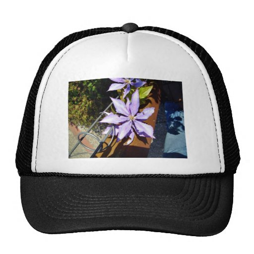 Blossoming purple flowers hats