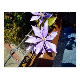 Blossoming purple flowers postcard
