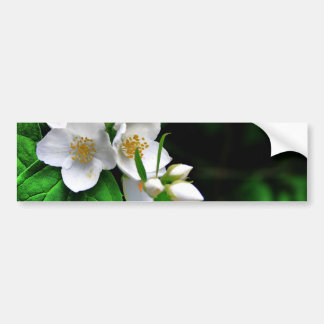 Blossoming seasons bumper sticker