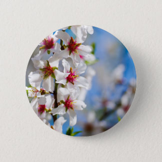 Blossoming tree branch with white flowers button