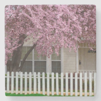 Blossoming Tree in the Suburbs Stone Coaster