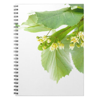 Blossoming twig of limetree or linden tree notebook