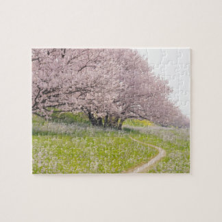 Blossoming Yoshino cherry trees in a field of Jigsaw Puzzle