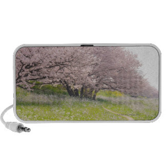 Blossoming Yoshino cherry trees in a field of Mini Speakers
