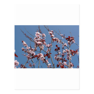 Blossoms against blue sky postcard