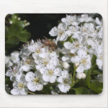 Blossoms and Bee Mouse Pad