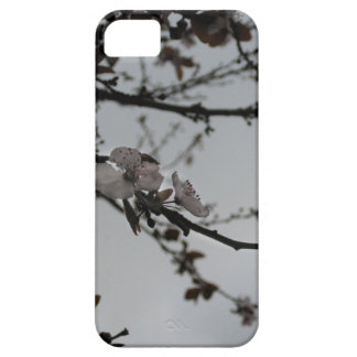 Blossoms at UCSD iPhone 5 Cases