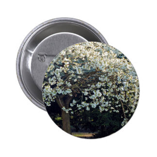 Blossoms Branches Tree Park Spring Flowers Forest Button