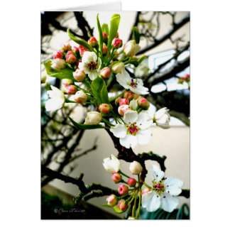 Blossoms in the cold card