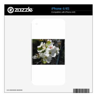 Blossoms of a pear tree in spring iPhone 4 skins