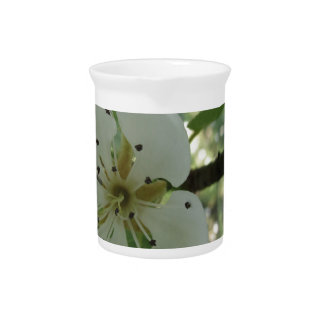 Blossoms of a pear tree in spring . Tuscany, Italy Beverage Pitcher