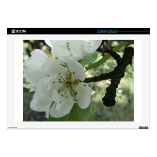 Blossoms of a pear tree in spring . Tuscany, Italy Decal For Laptop