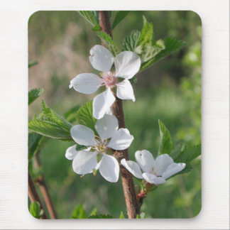 Blossoms of Spring by Janz Mousepad