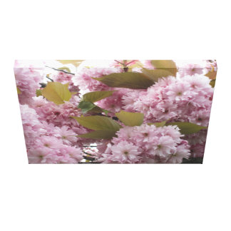 'Blossoms'