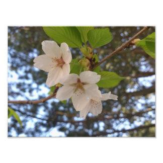 Blossoms Photograph